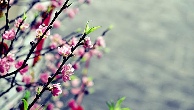 Mùng Một chớ dại mà… xui, tránh làm những điều này trong tháng Giêng để cả năm bình an như ý