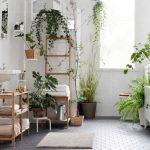 Những cấm kỵ nên biết khi đặt cây cảnh trong nhà vào mùa xuân 2020