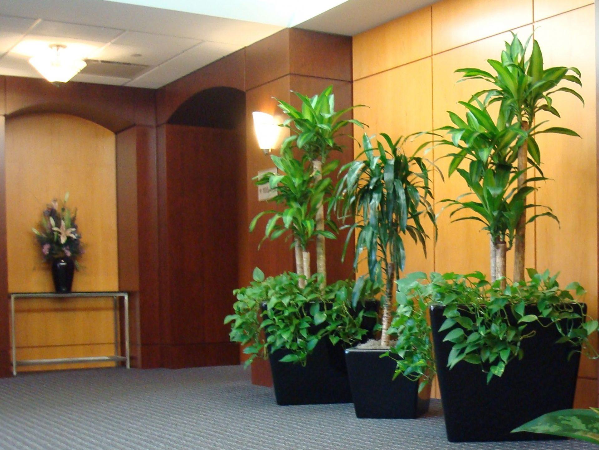 6 loài hoa đặt sảnh công ty giúp vượng vận khí, tài lộc ùn ùn kéo đến