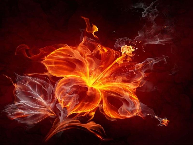 Cây hợp mệnh hỏa mang lại giàu sang, phú quý
