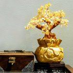 5 loại cây tài lộc mang lại may mắn bình an cho người