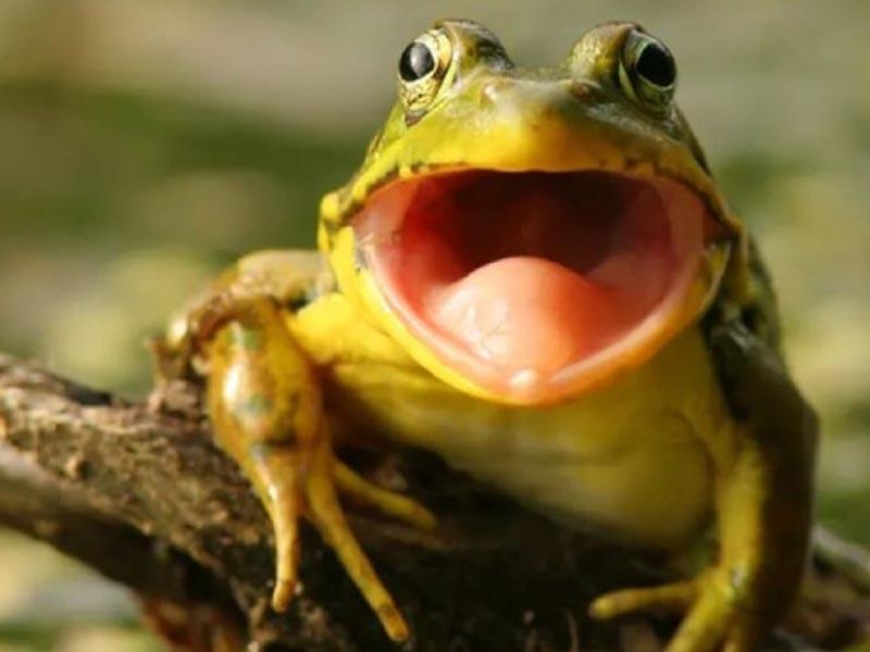 Giải mã giấc mơ- Mơ thấy ếch nhiều điều bí ẩn