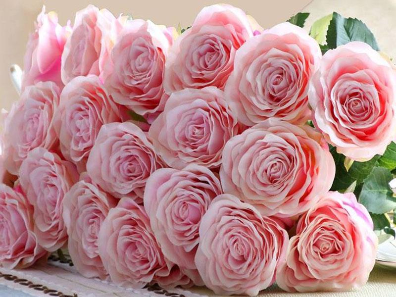 Mơ thấy hoa hồng- Những điều bạn chưa biết