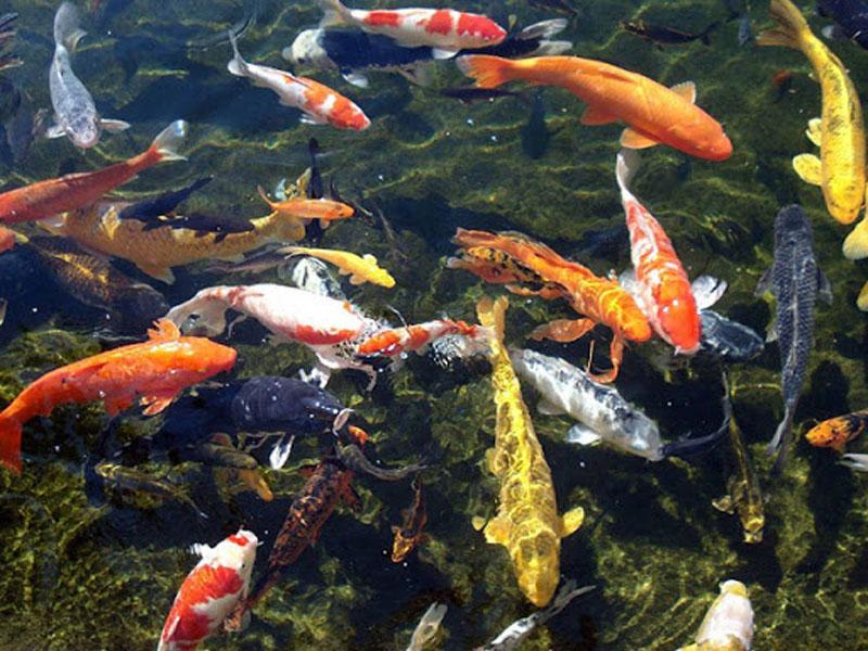 Đừng vội vui mừng khi mơ thấy bắt cá