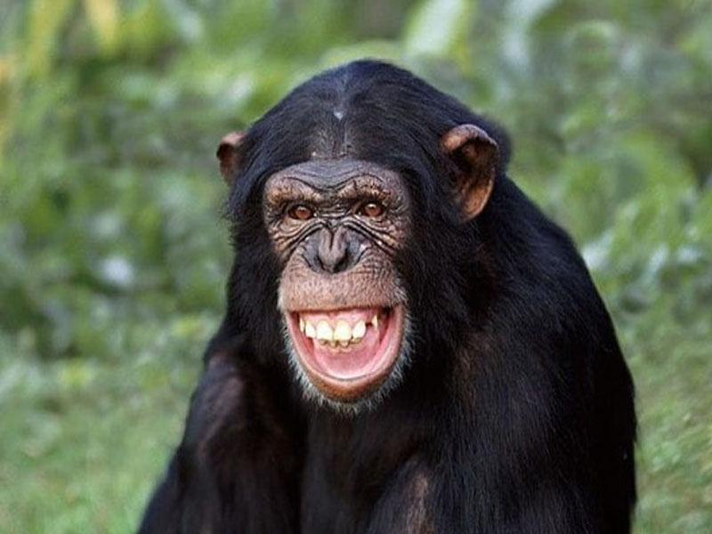 """Mơ thấy khỉ là """"hung hay cát"""""""
