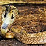 Mơ thấy rắn đánh con gì ? Giải đáp chính xác