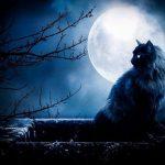 Mơ thấy mèo đen là may hay rủi- Giải đáp ngay